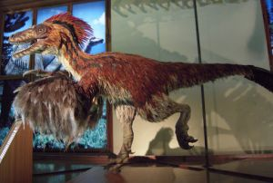 "Afbeelding 3: Model van een Deinonychus uit de tentoonstelling ""Feathered Dinosaurs and the Origin of Flight"""